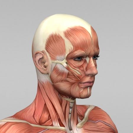 anatomie mens: Atletisch mannelijk menselijke anatomie en spieren Stockfoto