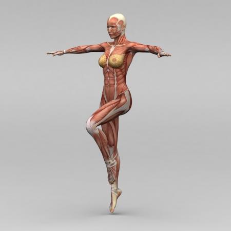 여성 인체 해부학과 근육 스톡 콘텐츠