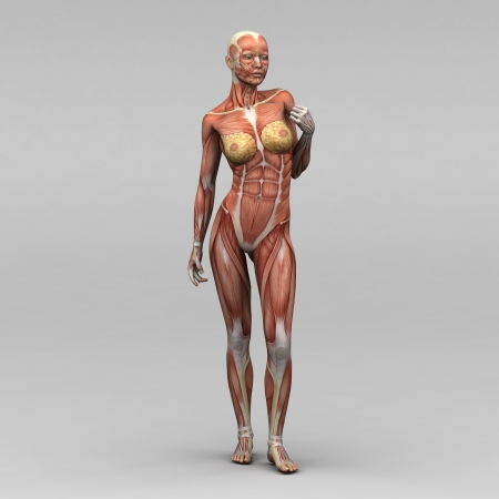 poor health: Female human anatomy and muscles Stock Photo
