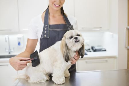 groomer: Groomer working on dog in office