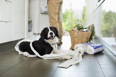 misbehaving: Dog unrolling toilet paper on floor