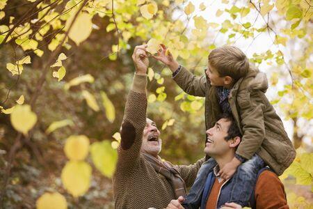 admiring: Three generations of men admiring leaves LANG_EVOIMAGES
