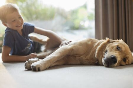 admiring: Smiling boy petting dog in living room