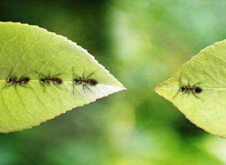 stranded: Ant stranded on leaf