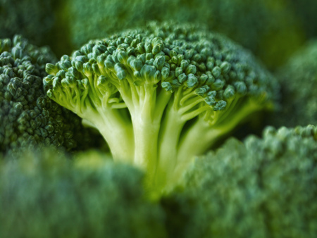 Extreme close up of raw broccoli LANG_EVOIMAGES