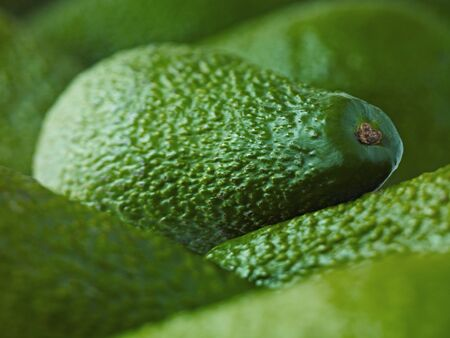 Extreme close up of whole Pinkerton avocados LANG_EVOIMAGES