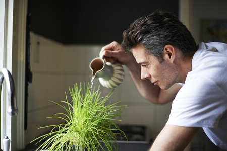 one mature man only: Man in kitchen,using jug,watering plant LANG_EVOIMAGES