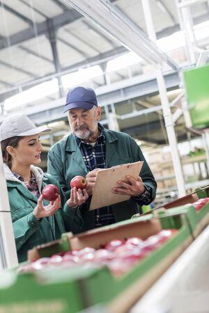 le cap: Gerente con el portapapeles y el trabajador que examinan las manzanas rojas en la planta de procesamiento de alimentos