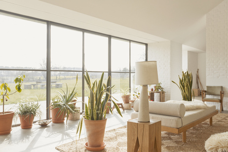 Potted Plants In Sunny Home Showcase Living Room Stock Photo   78378841