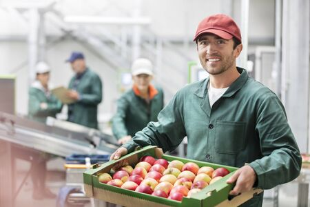 le cap: Portrait smiling worker holding box of apples in food processing plant