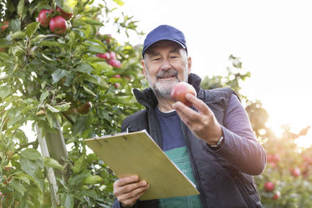 le cap: Male farmer with clipboard inspecting apples in orchard