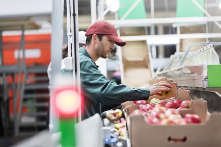 le cap: Macho, trabajador, inspeccionar, manzanas, alimento, proceso, planta LANG_EVOIMAGES