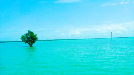 Tree in water with blue sky  in Bangladesh