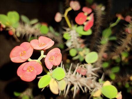 Beautiful blooming wild desert cactus flower Stockfoto