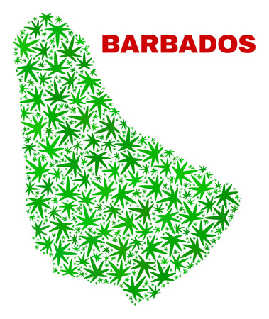 Vector cannabis Barbados map collage. Concept with green weed leaves for weed legalize campaign. Vector Barbados map is composed with weed leaves.