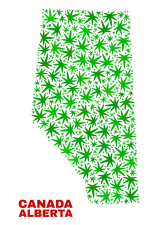 Vector marijuana Alberta Province map collage. Concept with green weed leaves for marijuana legalize campaign. Vector Alberta Province map is organized with weed leaves.