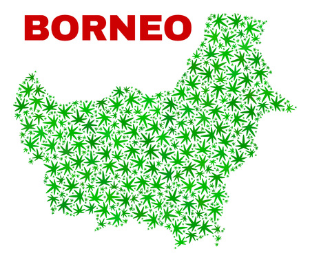 Vector cannabis Borneo map collage. Concept with green weed leaves for weed legalize campaign. Vector Borneo map is formed from cannabis leaves.