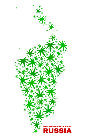 Vector cannabis Krasnoyarskiy Kray map mosaic. Template with green weed leaves for weed legalize campaign. Vector Krasnoyarskiy Kray map is created with cannabis leaves. Illustration