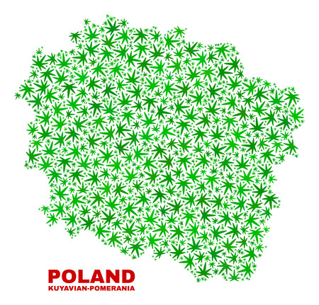 Vector marijuana Kuyavian-Pomeranian Voivodeship map mosaic. Concept with green weed leaves for weed legalize campaign. Vector Kuyavian-Pomeranian Voivodeship map is created of weed leaves.