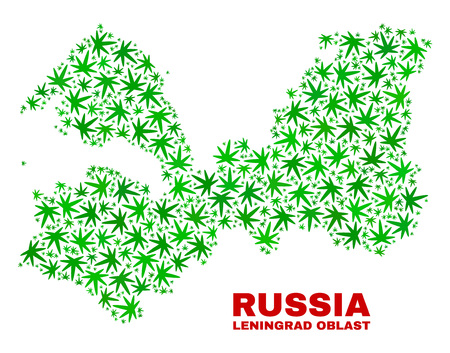 Vector cannabis Leningrad Region map mosaic. Concept with green weed leaves for weed legalize campaign. Vector Leningrad Region map is created with weed leaves. Illustration