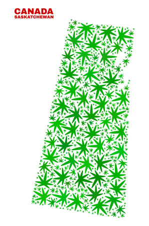 Vector cannabis Saskatchewan Province map collage. Template with green weed leaves for cannabis legalize campaign. Vector Saskatchewan Province map is composed from cannabis leaves. Illustration