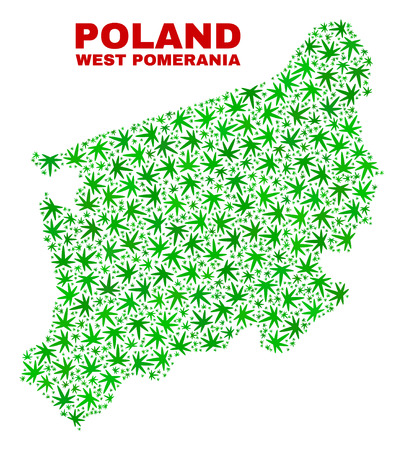 Vector marijuana West Pomeranian Voivodeship map mosaic. Template with green weed leaves for cannabis legalize campaign. Vector West Pomeranian Voivodeship map is organized with cannabis leaves.