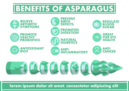 antioxidant: Benefits of Asparagus Infographics - Vector flat design art