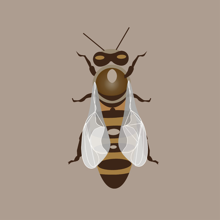 Vector illustration of bee