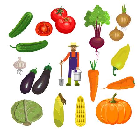 Set of fresh vegetables. Vector illustration