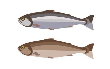 Set of two fish in flat style. Vector illustration
