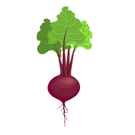 Beet with leaf. Vector illustration Illustration