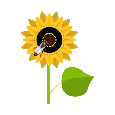 pedicle: Sunflower with bee. Vector illustration isolated on white background Illustration