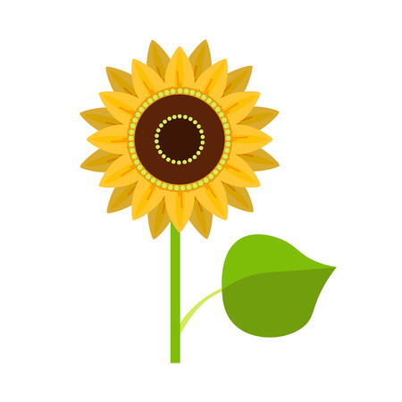 pedicle: Sunflower vector illustration isolated on white background Illustration