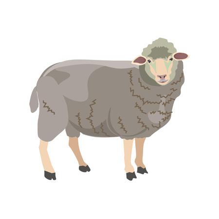 Sheep on white background. Vector illustration  イラスト・ベクター素材