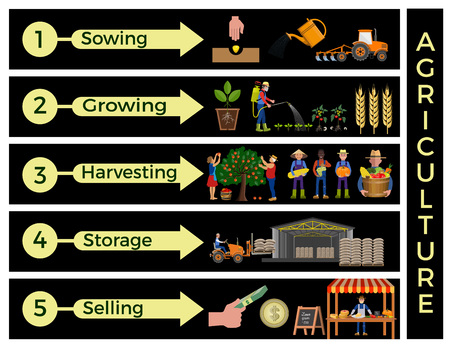 The main steps for agricultural practices. Vector infographics Illustration