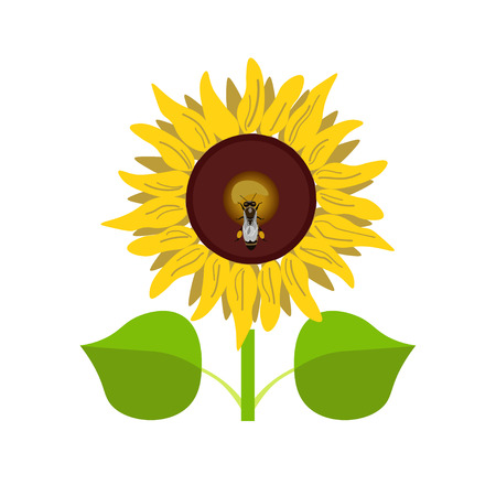 Sunflower with bee. Vector illustration isolated on white background Illustration