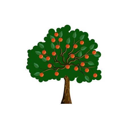 Apple tree with red apple fruits. Vector illustration