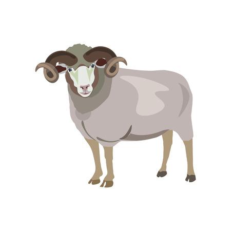Ram on white background. Vector illustration