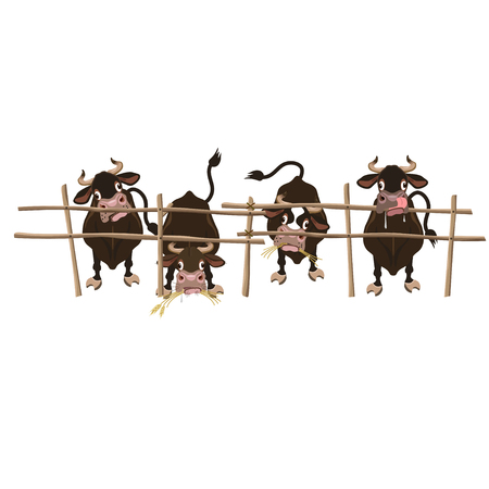 Four cows behind the fence. Vector illustration