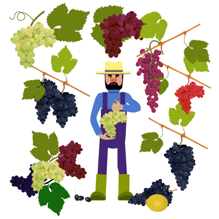 winemaking: Farmer with grapes. Vector illustration