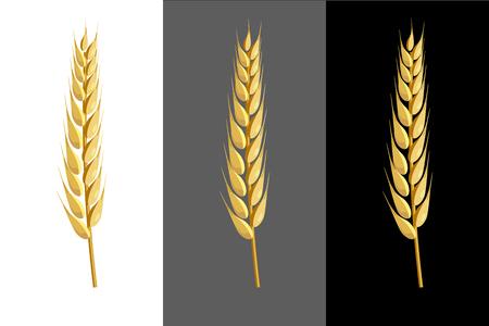 Wheat ear. Realistic vector illustration
