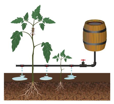 Drip irrigation system, vector illustration