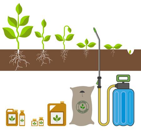 식물 성장 단계. 벡터 일러스트 레이 션