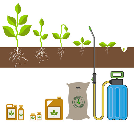 Stage of growth of plant. Vector illustration Vettoriali