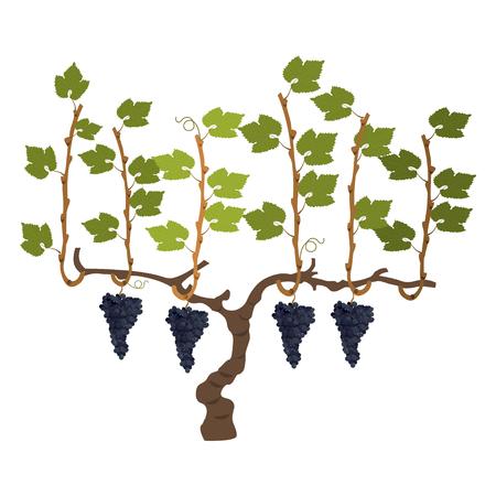 Vector il cespuglio dell'uva Vettoriali