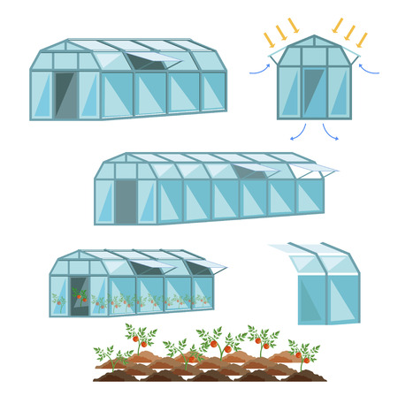 Set of vector greenhouses with tomatoes