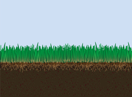 mould: Vector soil and grass. Cutaway