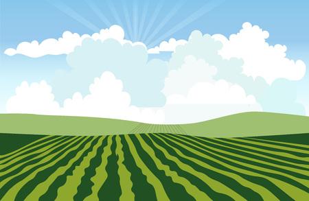 Paysage avec champ vert. Illustration vectorielle