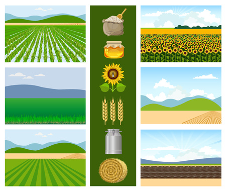Set of agricultural fields with food. Vector illustrations.