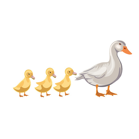 Duck with ducklings in row. Vector illustration